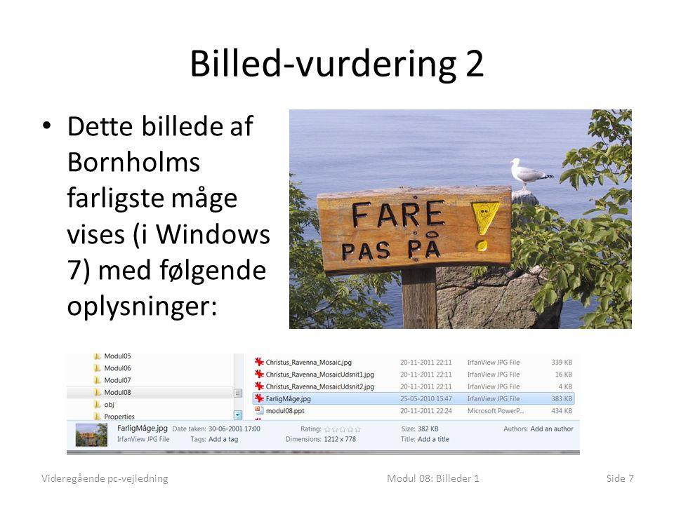 Billed-vurdering 2 Videregående pc-vejledningModul 08: Billeder 1Side 7 • Dette billede af Bornholms farligste måge vises (i Windows 7) med følgende oplysninger: