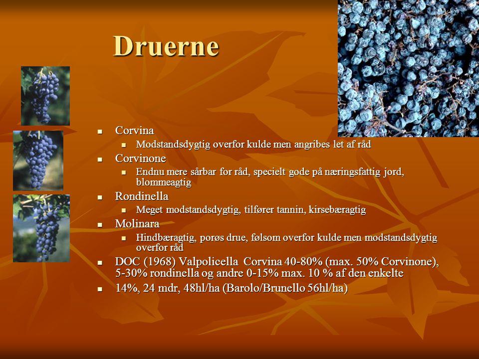 Druerne  Corvina  Modstandsdygtig overfor kulde men angribes let af råd  Corvinone  Endnu mere sårbar for råd, specielt gode på næringsfattig jord, blommeagtig  Rondinella  Meget modstandsdygtig, tilfører tannin, kirsebæragtig  Molinara  Hindbæragtig, porøs drue, følsom overfor kulde men modstandsdygtig overfor råd  DOC (1968) Valpolicella Corvina 40-80% (max.