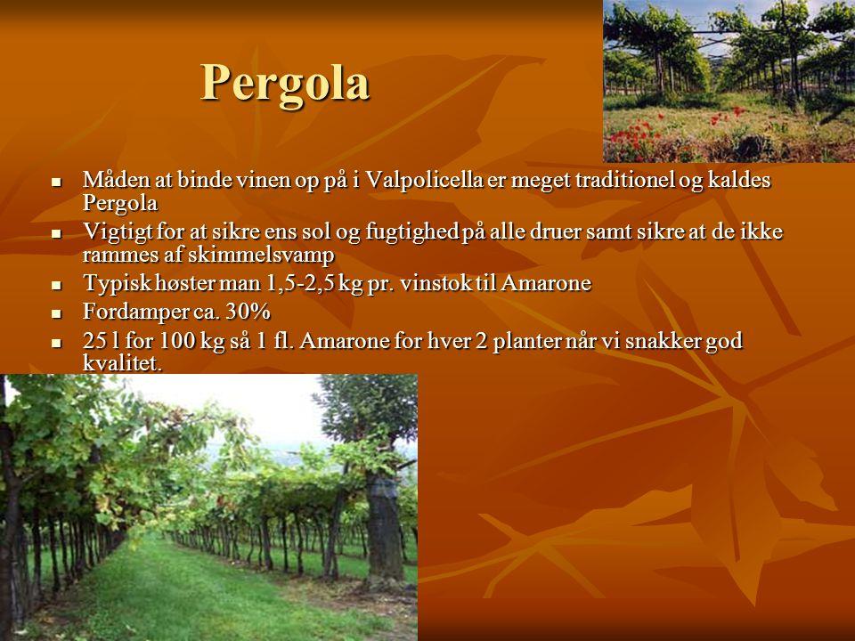 Pergola  Måden at binde vinen op på i Valpolicella er meget traditionel og kaldes Pergola  Vigtigt for at sikre ens sol og fugtighed på alle druer samt sikre at de ikke rammes af skimmelsvamp  Typisk høster man 1,5-2,5 kg pr.