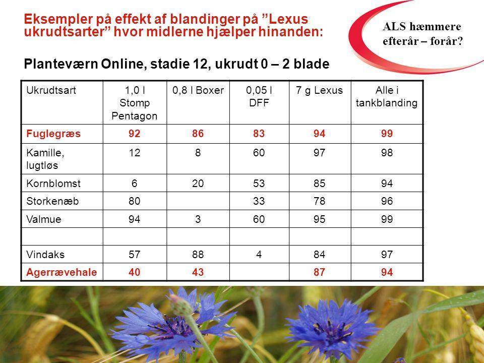 Ukrudtsart1,0 l Stomp Pentagon 0,8 l Boxer0,05 l DFF 7 g LexusAlle i tankblanding Fuglegræs9286839499 Kamille, lugtløs 128609798 Kornblomst620538594 Storkenæb80337896 Valmue943609599 Vindaks578848497 Agerrævehale40438794 Eksempler på effekt af blandinger på Lexus ukrudtsarter hvor midlerne hjælper hinanden: Planteværn Online, stadie 12, ukrudt 0 – 2 blade ALS hæmmere efterår – forår