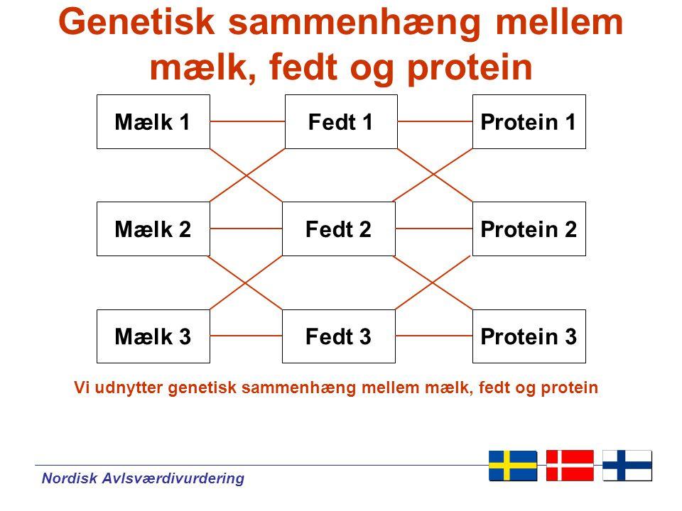 Nordisk Avlsværdivurdering Genetisk sammenhæng mellem mælk, fedt og protein Mælk 1Fedt 1 Protein 2Mælk 2 Mælk 3 Fedt 2 Fedt 3 Protein 1 Protein 3 Vi udnytter genetisk sammenhæng mellem mælk, fedt og protein