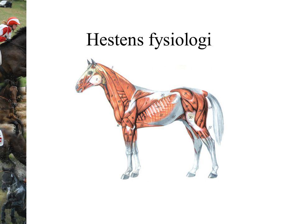 Hestens fysiologi