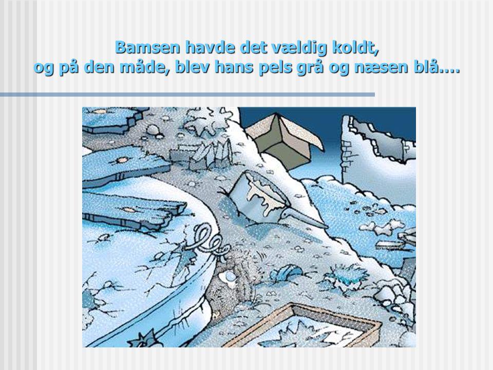 Bamsen havde det vældig koldt, og på den måde, blev hans pels grå og næsen blå.…