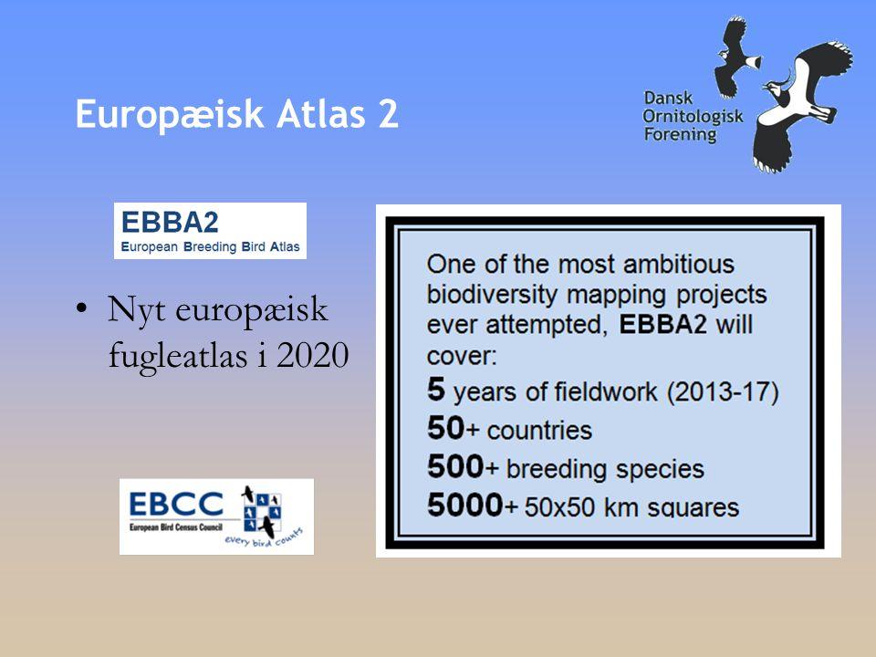Europæisk Atlas 2 •Nyt europæisk fugleatlas i 2020