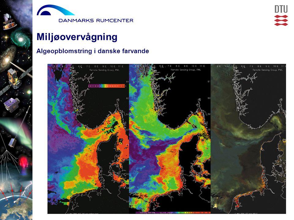Algeopblomstring i danske farvande Miljøovervågning