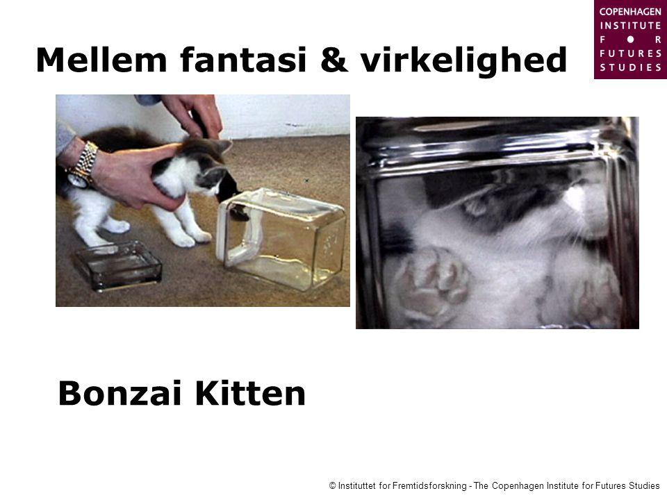 Bonzai Kitten Mellem fantasi & virkelighed