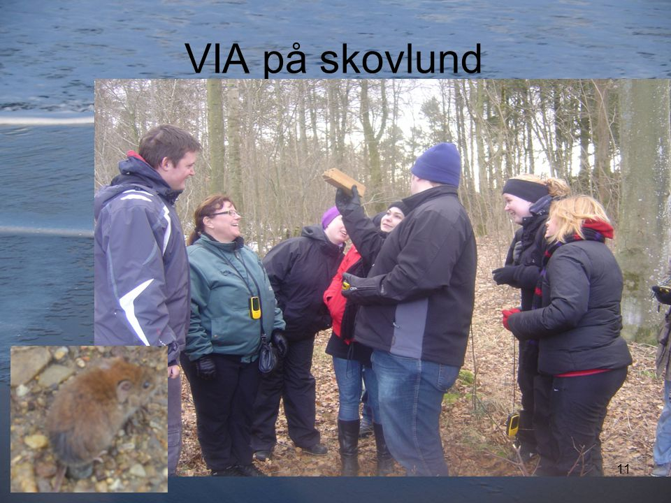 VIA på skovlund 11