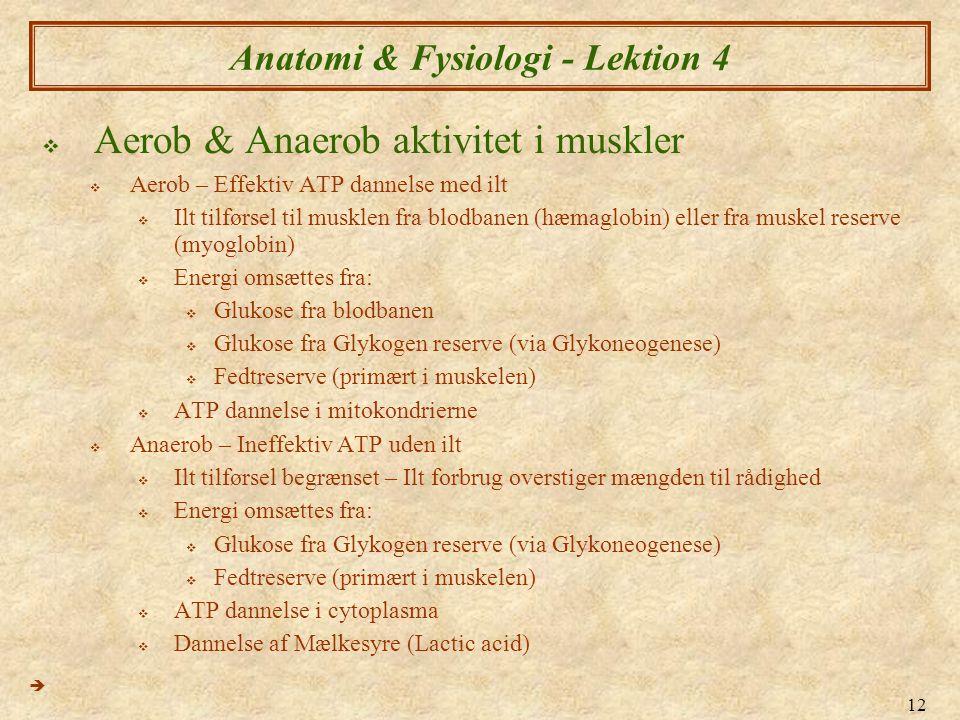 12 Anatomi & Fysiologi - Lektion 4  Aerob & Anaerob aktivitet i muskler  Aerob – Effektiv ATP dannelse med ilt  Ilt tilførsel til musklen fra blodb