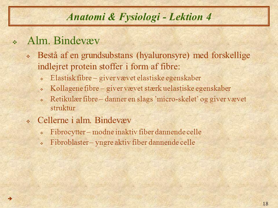 18 Anatomi & Fysiologi - Lektion 4  Alm. Bindevæv  Bestå af en grundsubstans (hyaluronsyre) med forskellige indlejret protein stoffer i form af fibr