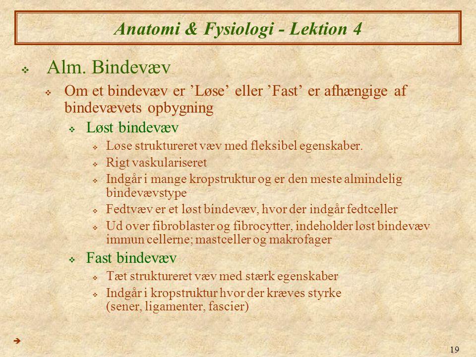 19 Anatomi & Fysiologi - Lektion 4  Alm. Bindevæv  Om et bindevæv er 'Løse' eller 'Fast' er afhængige af bindevævets opbygning  Løst bindevæv  Løs