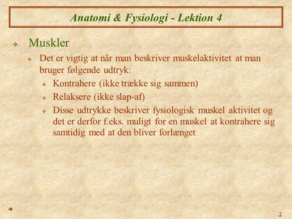 3 Anatomi & Fysiologi - Lektion 4  Muskler  Udtrykke brugt i beskrevelsen af muskelaktivitet  Agonist  Primært muskel/muskler i aktion over et led  Antagonist  Sekondær muskel/muskle, som har modsæt aktion til agonsiten over et led – kan evt.