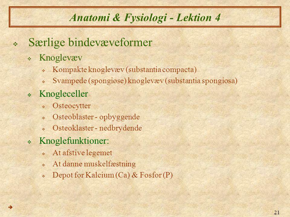 21 Anatomi & Fysiologi - Lektion 4  Særlige bindevæveformer  Knoglevæv  Kompakte knoglevæv (substantia compacta)  Svampede (spongiøse) knoglevæv (