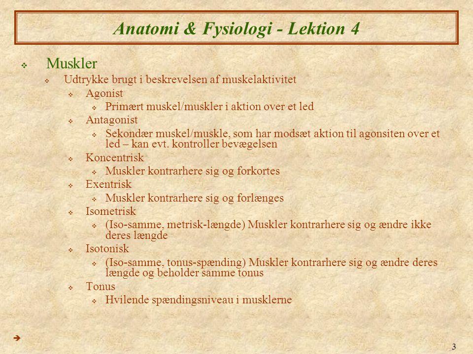 3 Anatomi & Fysiologi - Lektion 4  Muskler  Udtrykke brugt i beskrevelsen af muskelaktivitet  Agonist  Primært muskel/muskler i aktion over et led