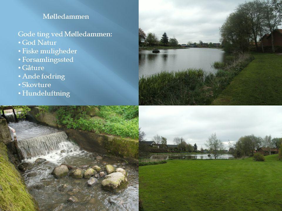 Mølledammen Gode ting ved Mølledammen: • God Natur • Fiske muligheder • Forsamlingssted • Gåture • Ande fodring • Skovture • Hundeluftning