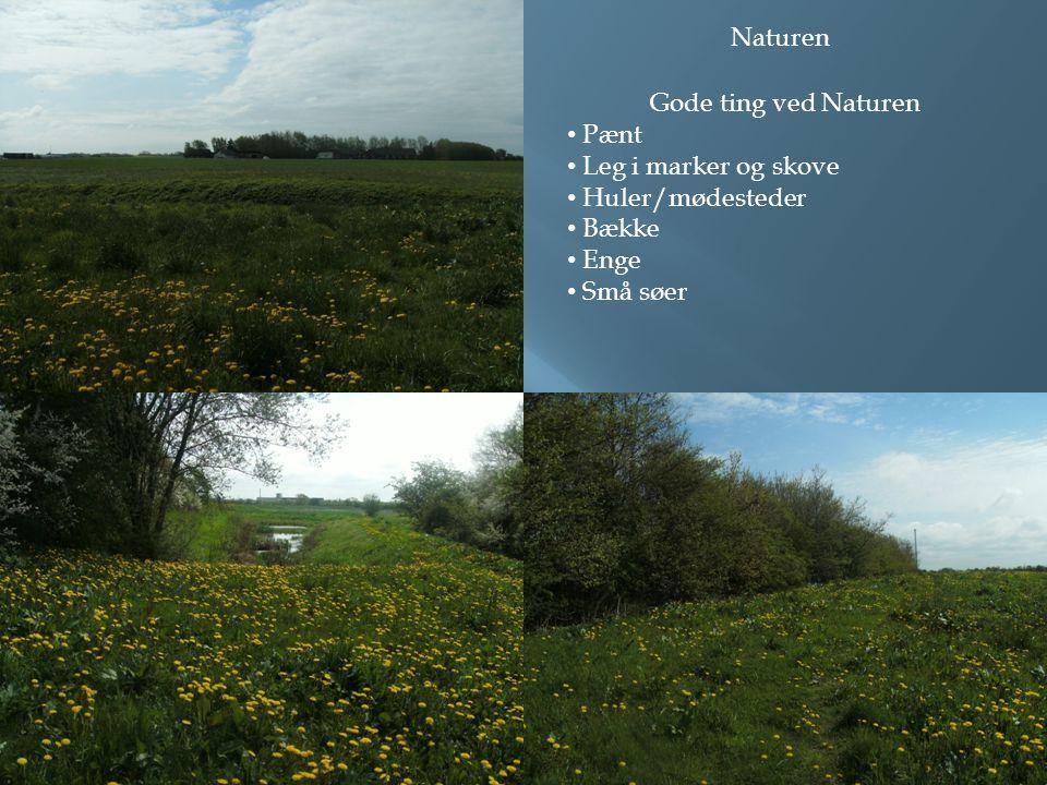 Naturen Gode ting ved Naturen • Pænt • Leg i marker og skove • Huler/mødesteder • Bække • Enge • Små søer