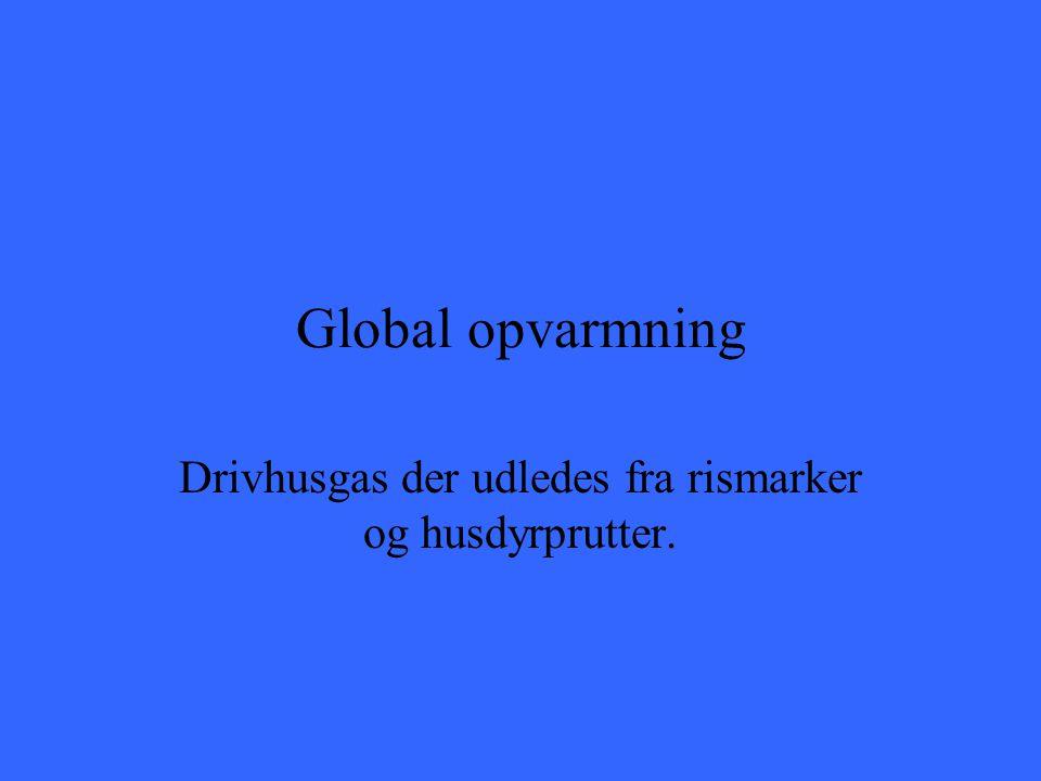 Global opvarmning Drivhusgas der udledes fra rismarker og husdyrprutter.