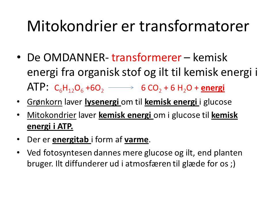 Mitokondrier er transformatorer • De OMDANNER- transformerer – kemisk energi fra organisk stof og ilt til kemisk energi i ATP: C 6 H 12 O 6 +6O 2 6 CO