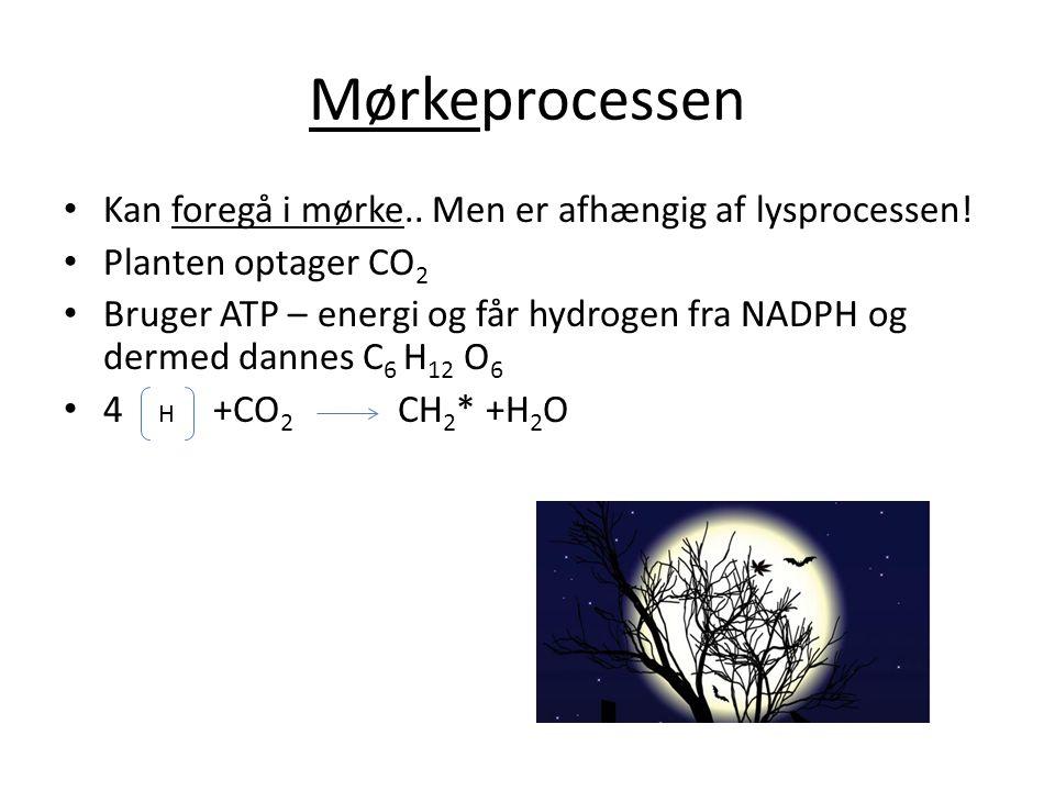 Mørkeprocessen • Kan foregå i mørke.. Men er afhængig af lysprocessen! • Planten optager CO 2 • Bruger ATP – energi og får hydrogen fra NADPH og derme