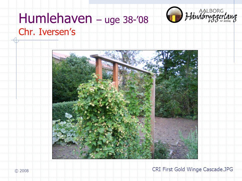 © 2008 Humlehaven – uge 38-'08 Chr. Iversen's CRI First Gold Winge Cascade.JPG