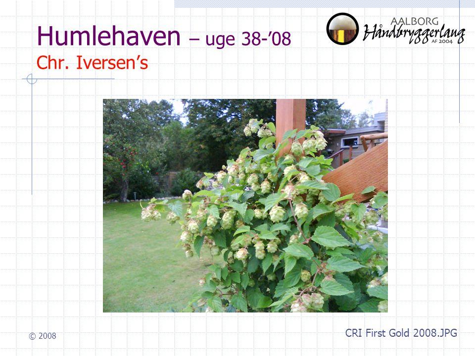 © 2008 Humlehaven – uge 38-'08 Chr. Iversen's CRI First Gold 2008.JPG