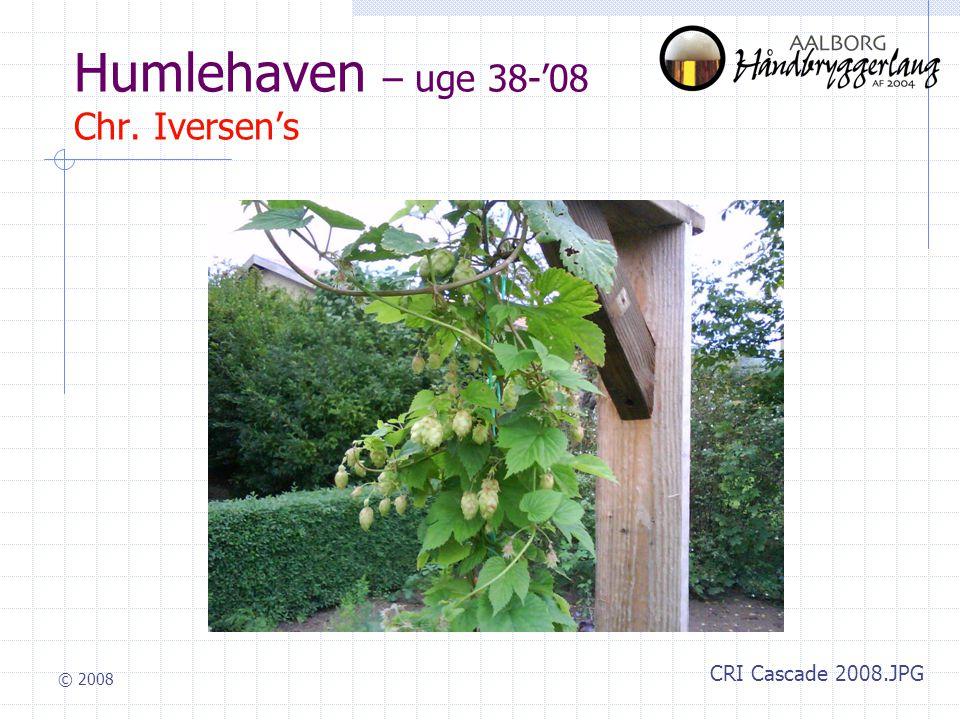 © 2008 Humlehaven – uge 38-'08 Chr. Iversen's CRI Cascade 2008.JPG