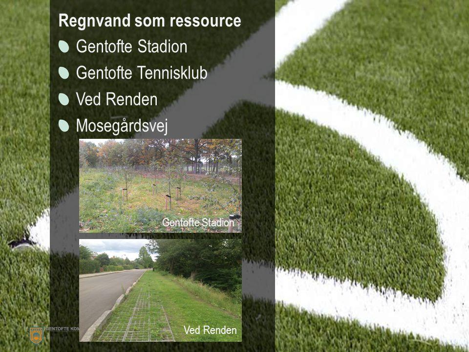 Regnvand som ressource Gentofte Stadion Gentofte Tennisklub Ved Renden Mosegårdsvej Ved Renden Gentofte Stadion