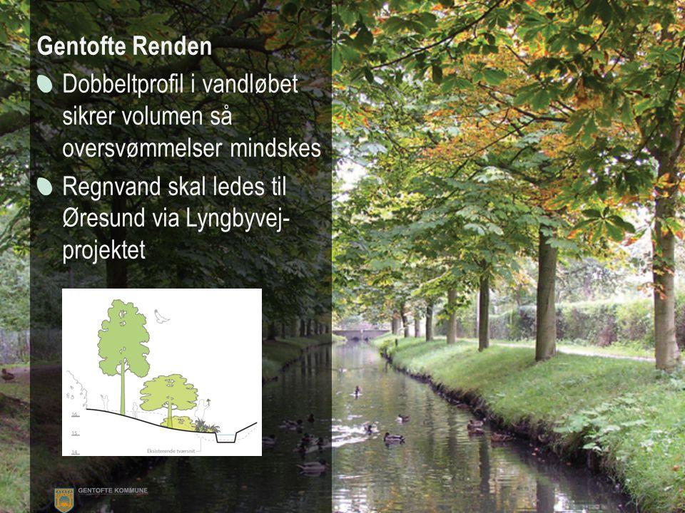 Gentofterenden Gentofte Renden Dobbeltprofil i vandløbet sikrer volumen så oversvømmelser mindskes Regnvand skal ledes til Øresund via Lyngbyvej- projektet