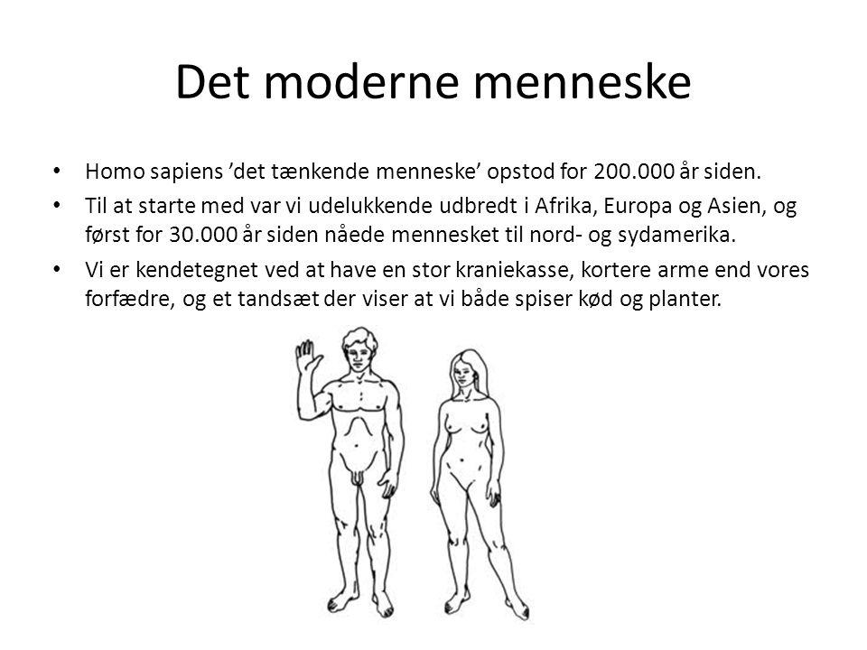 Det moderne menneske Homo sapiens 'det tænkende menneske' opstod for 200.000 år siden. Til at starte med var vi udelukkende udbredt i Afrika, Europa o
