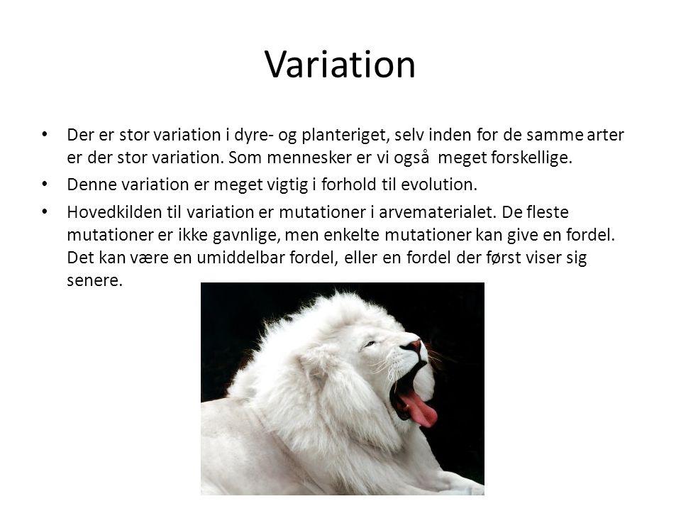Variation Der er stor variation i dyre- og planteriget, selv inden for de samme arter er der stor variation. Som mennesker er vi også meget forskellig