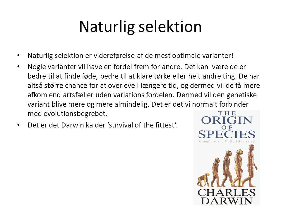 Naturlig selektion Naturlig selektion er videreførelse af de mest optimale varianter! Nogle varianter vil have en fordel frem for andre. Det kan være