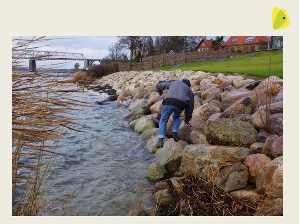 Stenene ligger her stadigt og andre steder er der kommet flere til 29-10-2013DN Fredericia14