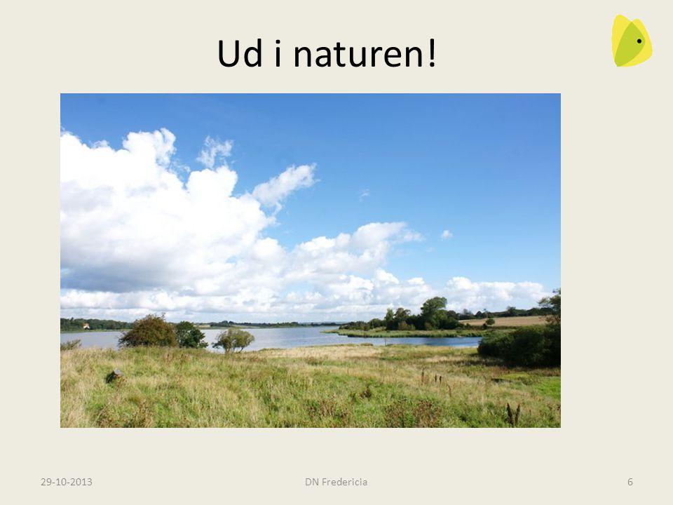 29-10-2013DN Fredericia6 Ud i naturen. Rands Fjord og Fager Lien Måske havørne.
