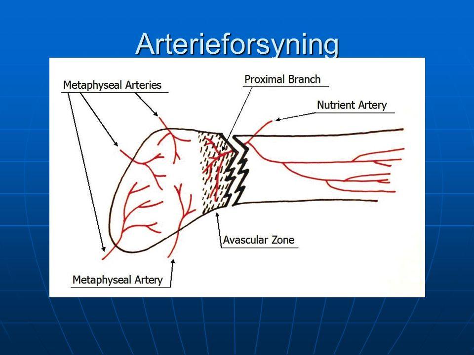 Arterieforsyning