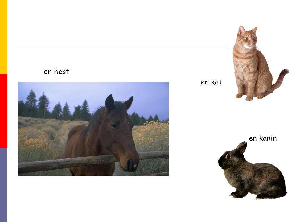en hest en kanin en kat