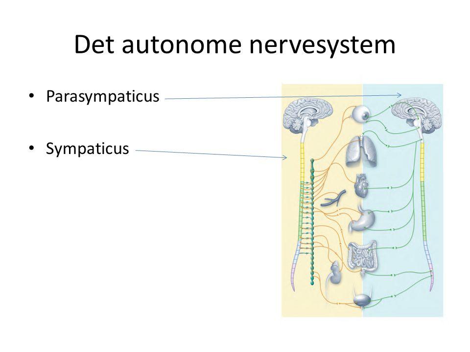 Det autonome nervesystem Parasympaticus Sympaticus