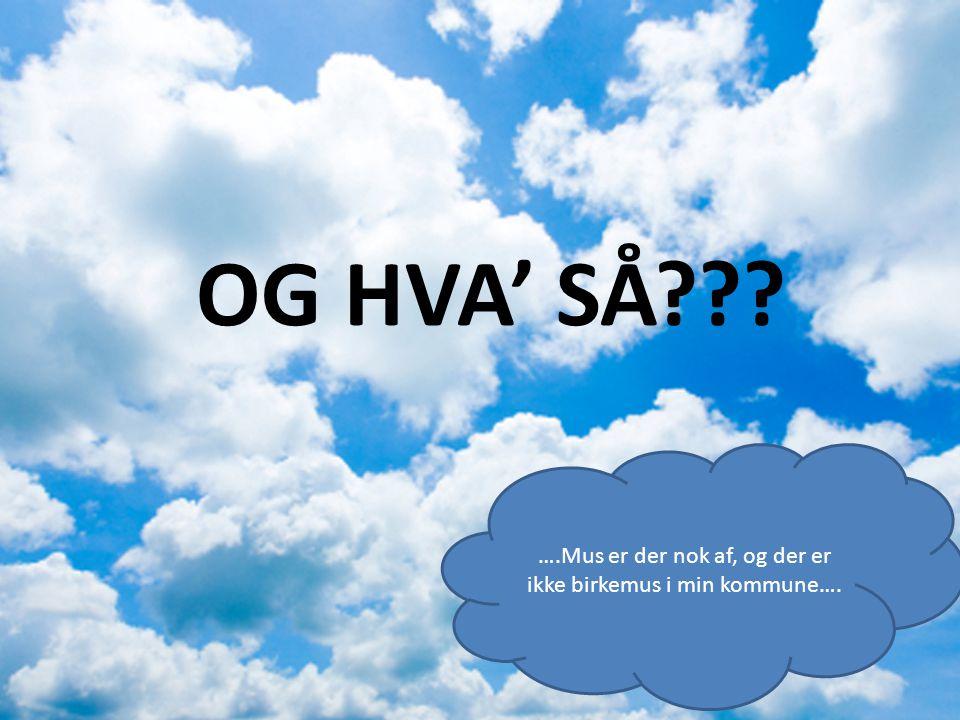 OG HVA' SÅ ….Mus er der nok af, og der er ikke birkemus i min kommune….
