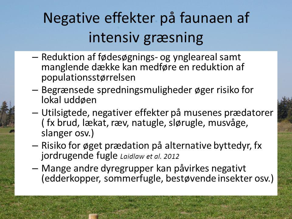 Negative effekter på faunaen af intensiv græsning – Reduktion af fødesøgnings- og yngleareal samt manglende dække kan medføre en reduktion af populationsstørrelsen – Begrænsede spredningsmuligheder øger risiko for lokal uddøen – Utilsigtede, negativer effekter på musenes prædatorer ( fx brud, lækat, ræv, natugle, slørugle, musvåge, slanger osv.) – Risiko for øget prædation på alternative byttedyr, fx jordrugende fugle Laidlaw et al.