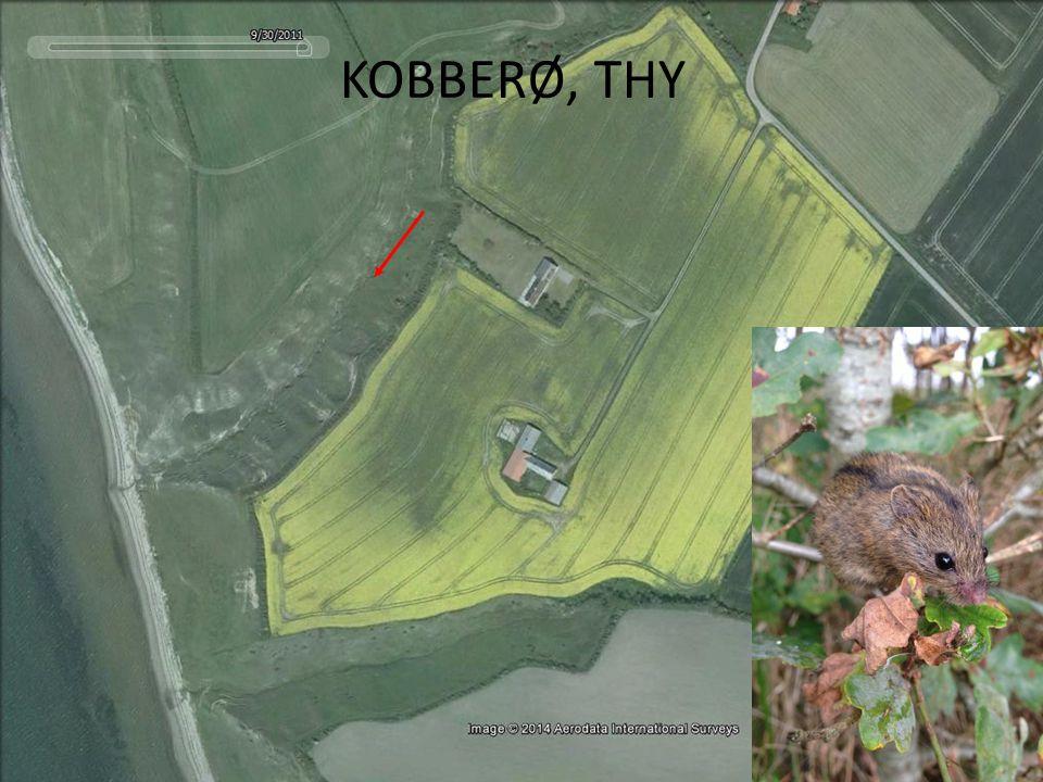 KOBBERØ, THY