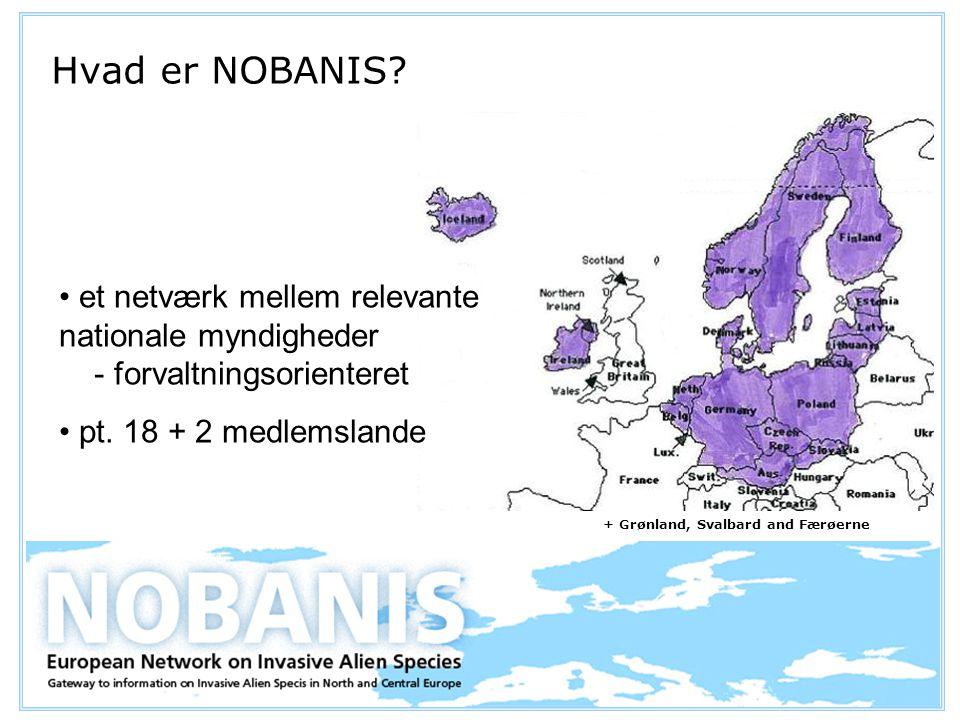 et netværk mellem relevante nationale myndigheder - forvaltningsorienteret pt.