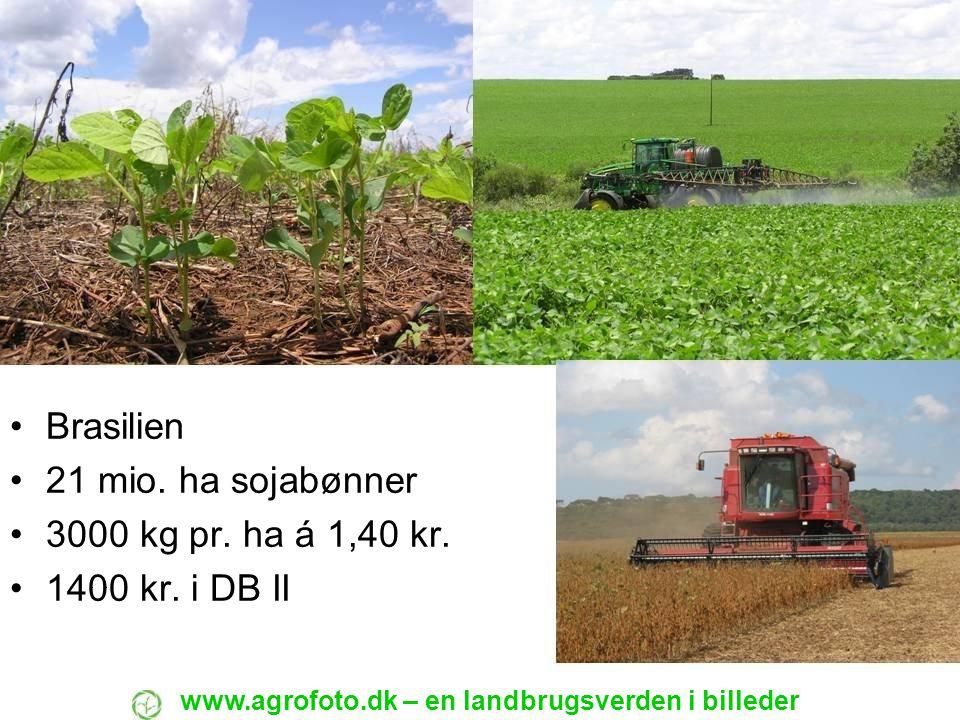 Brasilien 21 mio. ha sojabønner 3000 kg pr. ha á 1,40 kr. 1400 kr. i