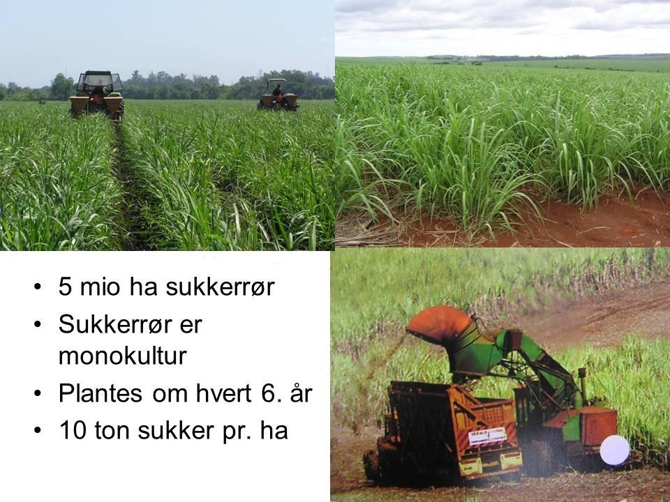 Mio ha sukkerrør sukkerrør er monokultur plantes om hvert 6. år