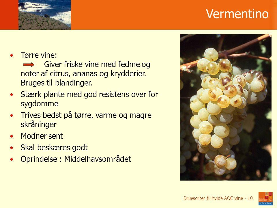 Vermentino Tørre vine: Giver friske vine med fedme og noter af citrus, ananas og krydderier.