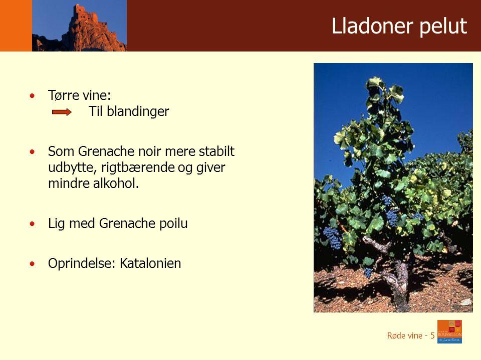 Winnice w liczbach Lladoner pelut Tørre vine: Til blandinger Som Grenache noir mere stabilt udbytte, rigtbærende og giver mindre alkohol.