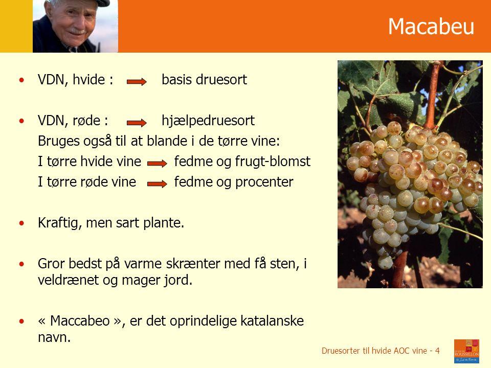 Мacabeu VDN, hvide : basis druesort VDN, røde : hjælpedruesort Bruges også til at blande i de tørre vine: I tørre hvide vine fedme og frugt-blomst I tørre røde vine fedme og procenter Kraftig, men sart plante.