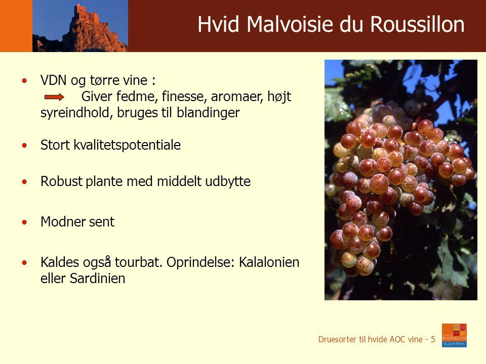 Winnice w liczbach Hvid Malvoisie du Roussillon VDN og tørre vine : Giver fedme, finesse, aromaer, højt syreindhold, bruges til blandinger Stort kvalitetspotentiale Robust plante med middelt udbytte Modner sent Kaldes også tourbat.
