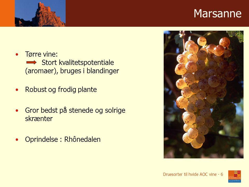 Winnice w liczbach Мarsanne Tørre vine: Stort kvalitetspotentiale (aromaer), bruges i blandinger Robust og frodig plante Gror bedst på stenede og solrige skrænter Oprindelse : Rhônedalen Druesorter til hvide AOC vine - 6