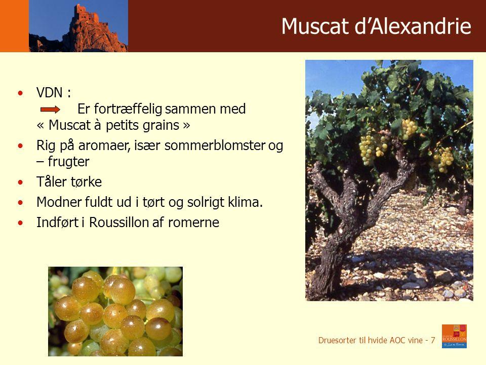 Winnice w liczbach Muscat d'Alexandrie VDN : Er fortræffelig sammen med « Muscat à petits grains » Rig på aromaer, især sommerblomster og – frugter Tåler tørke Modner fuldt ud i tørt og solrigt klima.