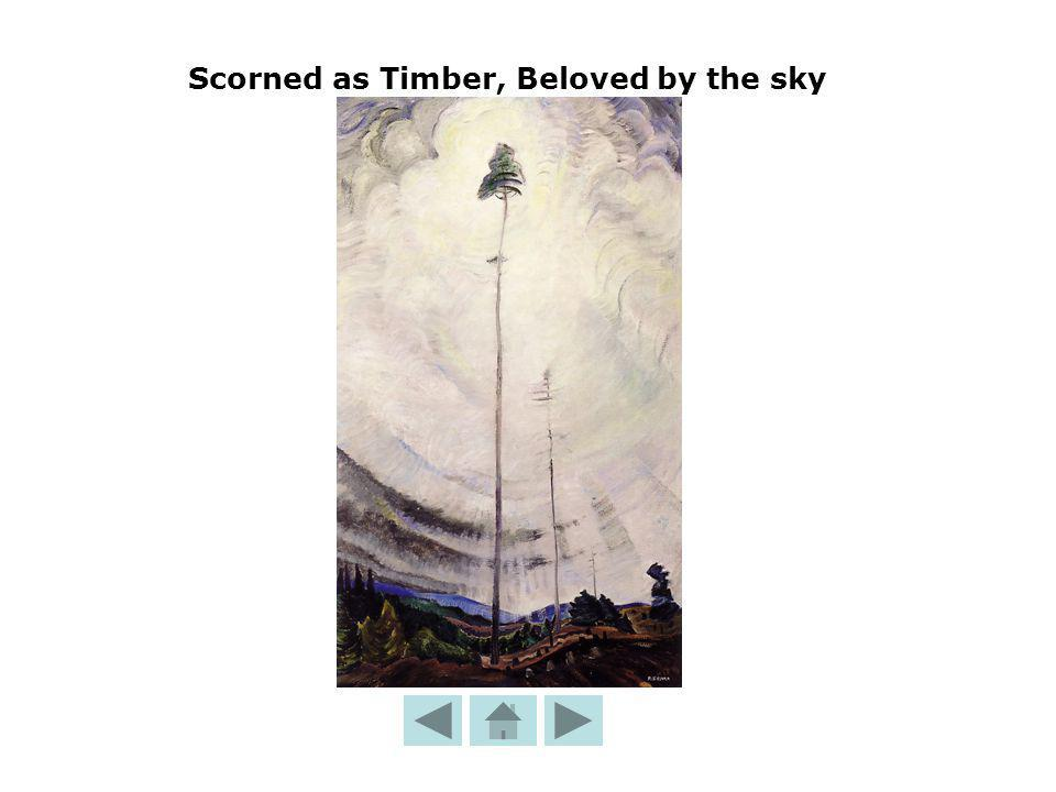 Scorned as Timber, Beloved by the sky