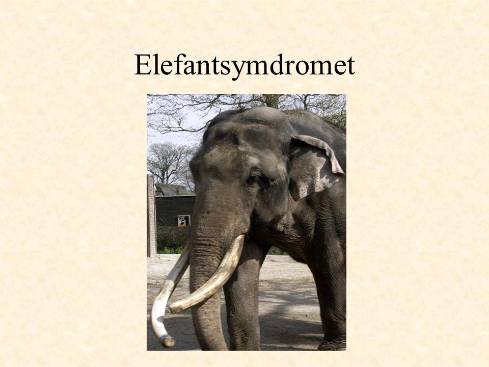 Elefantsymdromet