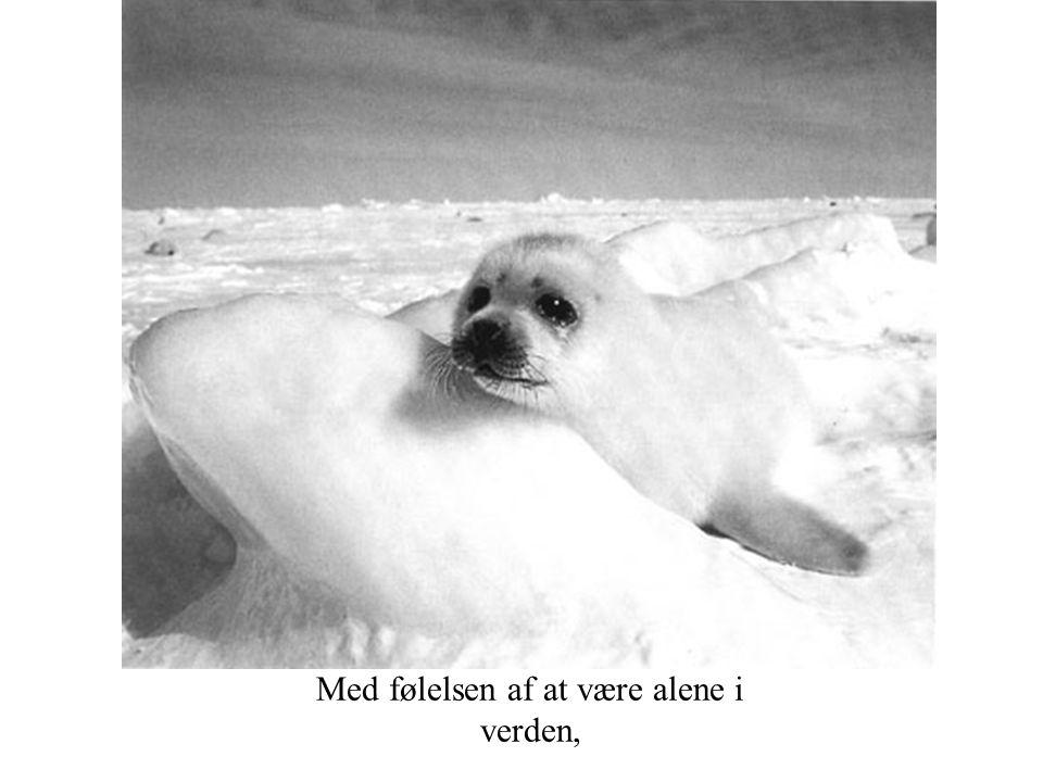 Med følelsen af at være alene i verden,